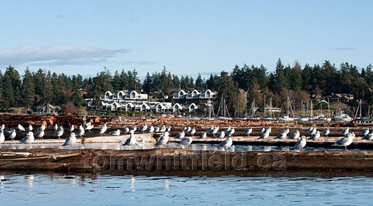 Photo of Beachcomber Marina At Nanoose