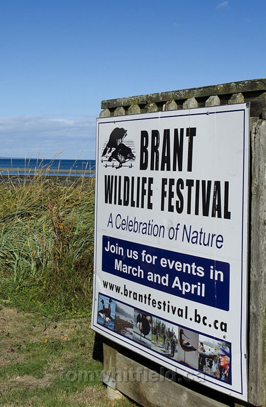 Photo of Brant Festival In Qualicum Beach