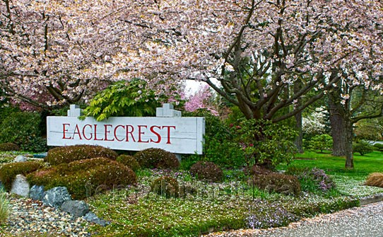 Photo of Eaglecrest Cherry Blossoms