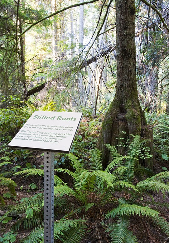 Photo of Ecology Info Interpretive Signage