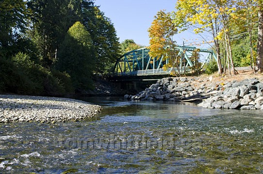 Photo of Fall Salmon Spawning On Little Qualicum River