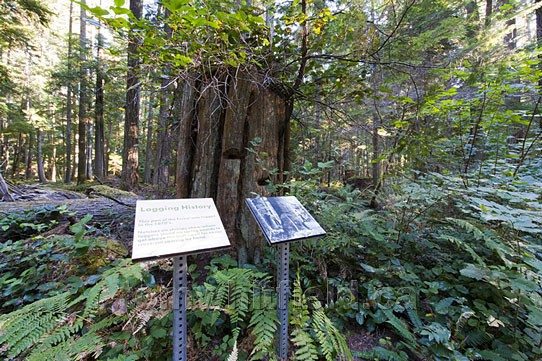 Photo of Logging History Interpretive Signage