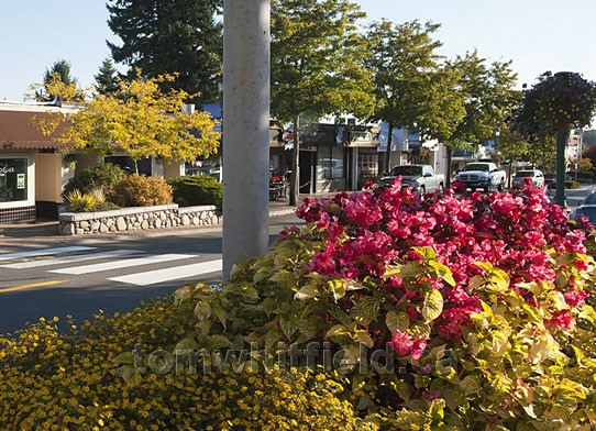 Photo of Qualicum Beach Bloomin'